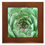 Succulent Framed Tile