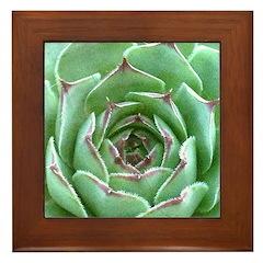 Succulent Framed Tile