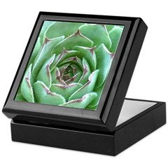 Succulent Keepsake Box