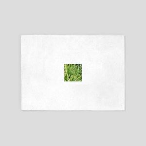 Spikey cactus 5'x7'Area Rug