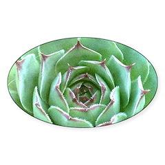 Succulent Bumper Stickers