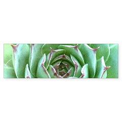 Succulent Bumper Sticker