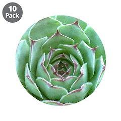 Succulent 3.5