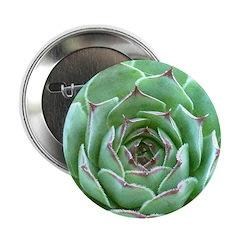 Succulent 2.25