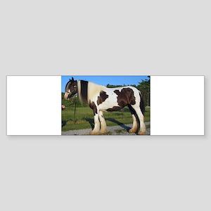 horse gypsy vanner Bumper Sticker