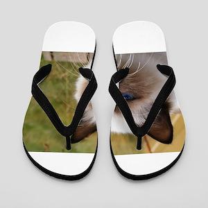birman Flip Flops
