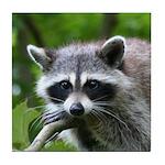 Raccoon Tile Coaster