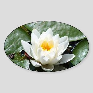 Lotus Sticker (Oval)