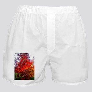 Fall, Autumn, Leaves, nature, red, or Boxer Shorts