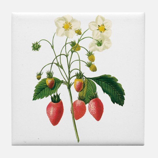 Vintage Strawberries by Redoute Tile Coaster