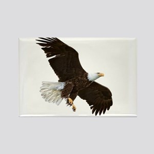 Amazing Bald Eagle Magnets