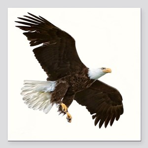 "Amazing Bald Eagle Square Car Magnet 3"" x 3"""