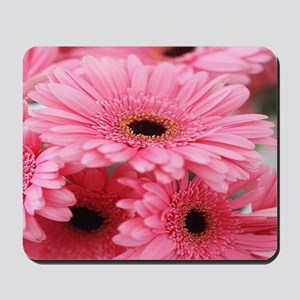 Pink Gerbera Daisies Mousepad