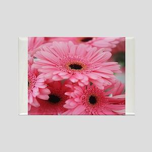 Pink Gerbera Daisies Magnets