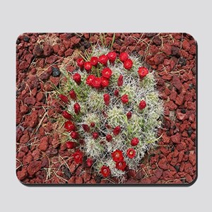 Red cactus in flower, Utah, USA Mousepad