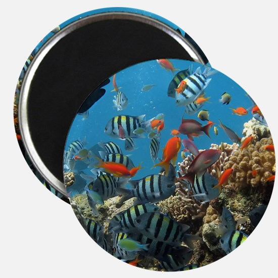 Fishes and Underwater Plants Magnets