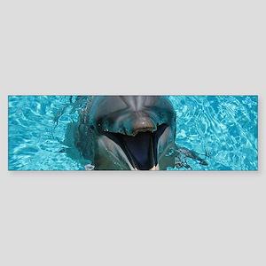 Smiling Dolphin Bumper Sticker