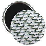 Dunkleosteus pattern Magnets