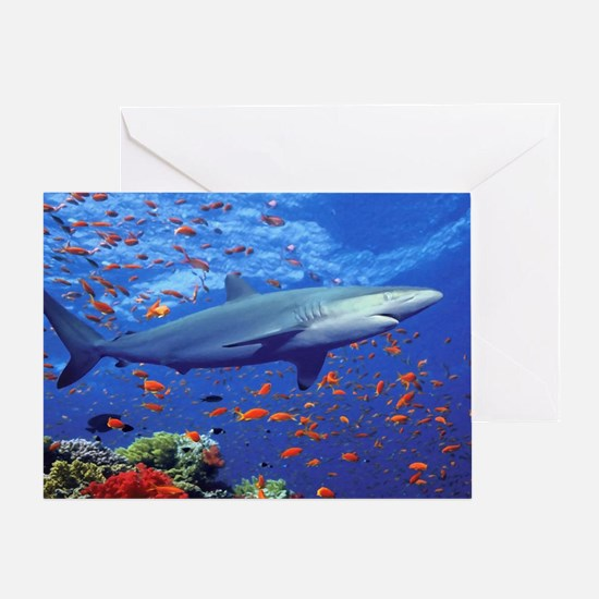 Colorful Shark Card Greeting Cards