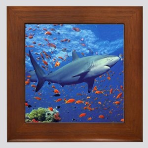 Colorful Shark Framed Tile