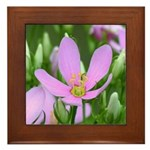 Rose Pink Framed Tile