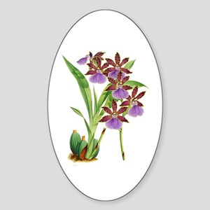 Zygopetalum-clayi Purple Orchid Sticker (Oval)