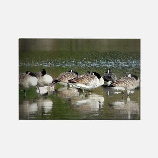 Cool Goose hunting Rectangle Magnet