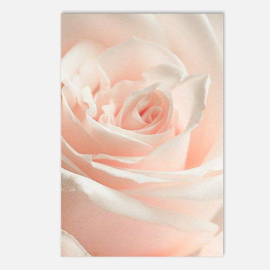 Soft Rose Postcards (Package of 8)