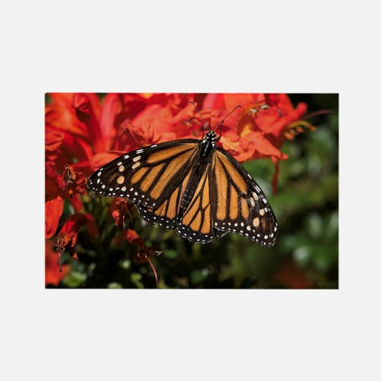 Honeysuckle Monarch Butterfly Bea Rectangle Magnet