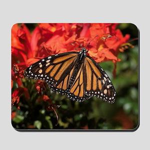 Honeysuckle Monarch Butterfly Beauty Mousepad