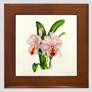 Violet Whisper Cattleyea Orchid Framed Tile