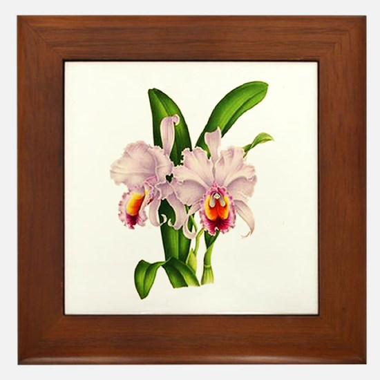 Violet Whisper Cattleyea Orchid Framed Tile