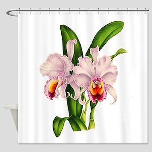 Violet Whisper Cattleyea Orchid Shower Curtain