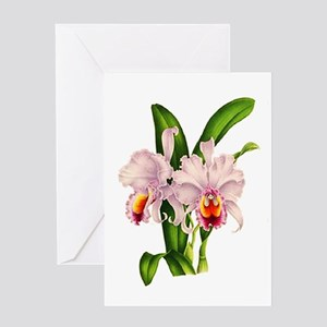 Violet Whisper Cattleyea Orchid Greeting Card