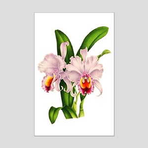 Violet Whisper Cattleyea Orchid Mini Poster Print