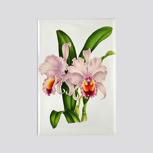 Violet Whisper Cattleyea Orchid Rectangle Magnet