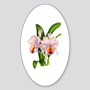 Violet Whisper Cattleyea Orchid Sticker (Oval)