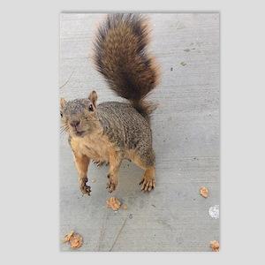 squirrel'n around Postcards (Package of 8)