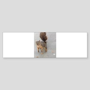 squirrel'n around Bumper Sticker