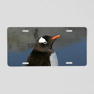 Gentoo Penguin Aluminum License Plate