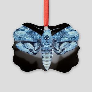 Moth Picture Ornament