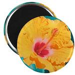 Orange Tropical Flower on Teal Magnets