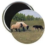 Dog Meets Sheep Magnet