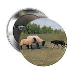 Dog Meets Sheep Button