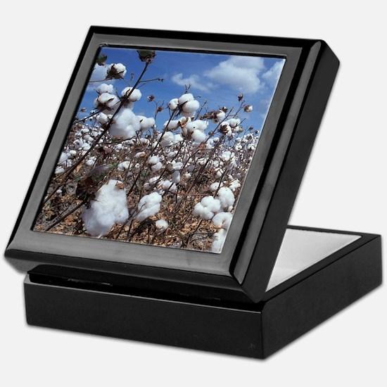 Cotton Field Keepsake Box