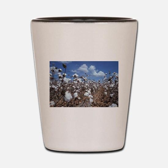 Cotton Field Shot Glass