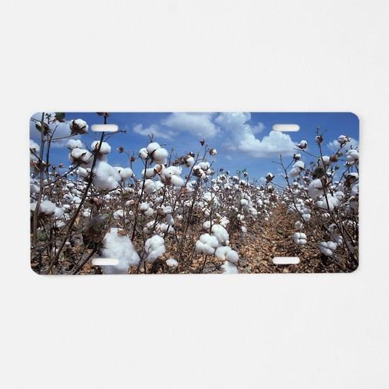 Cotton Field Aluminum License Plate