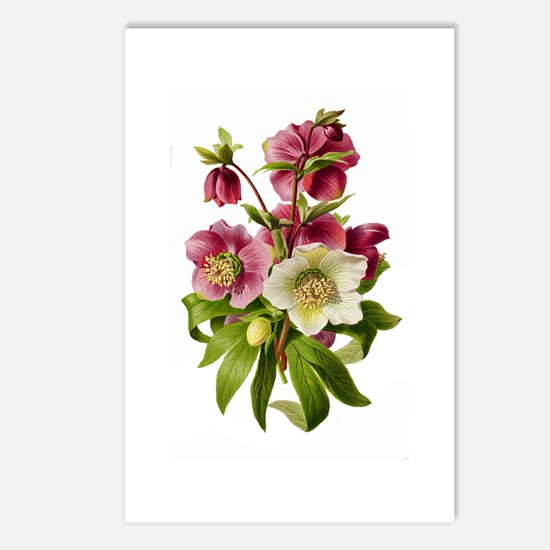 Purple and White Hellebor Postcards (Package of 8)