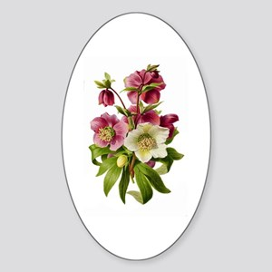 Purple and White Hellebores Sticker (Oval)