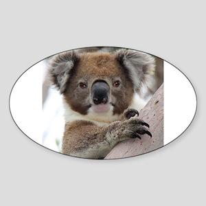 Precious Baby Koala in Eucalyptus G Sticker